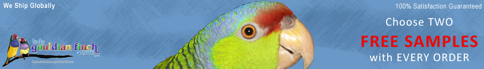 Lady Gouldian Finch.com