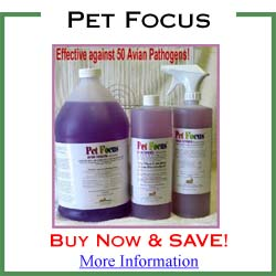Pet Focus