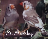 Male and Female Pieds